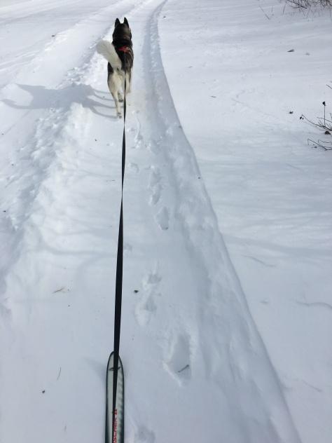 ski2018-2