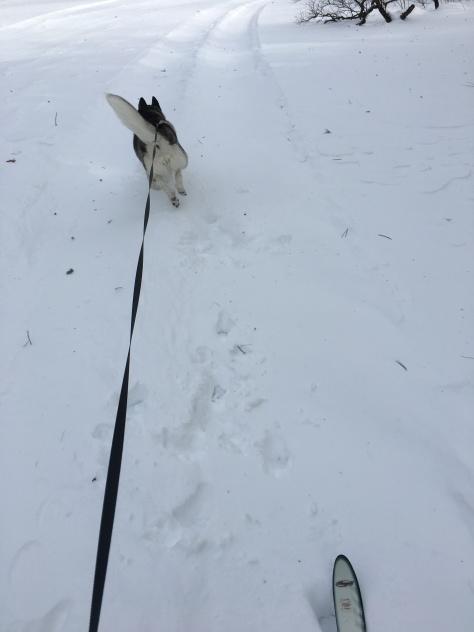 ski2018